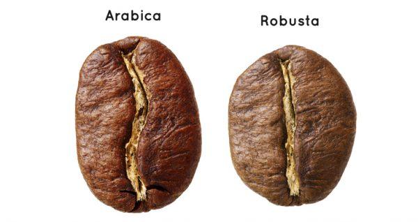specii-de-cafea